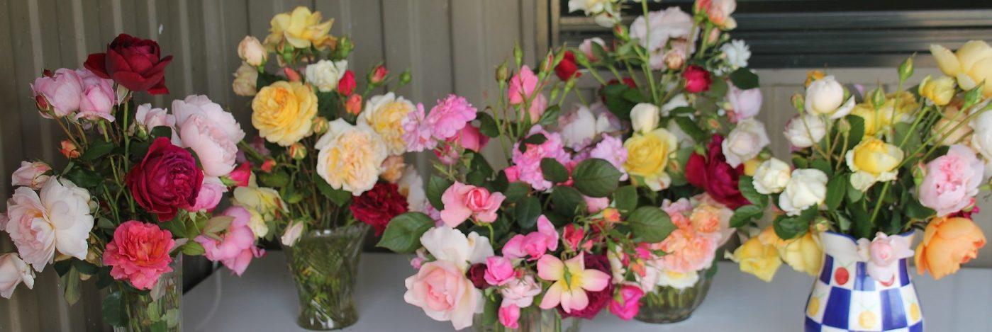 Grassroots Rose Nursery
