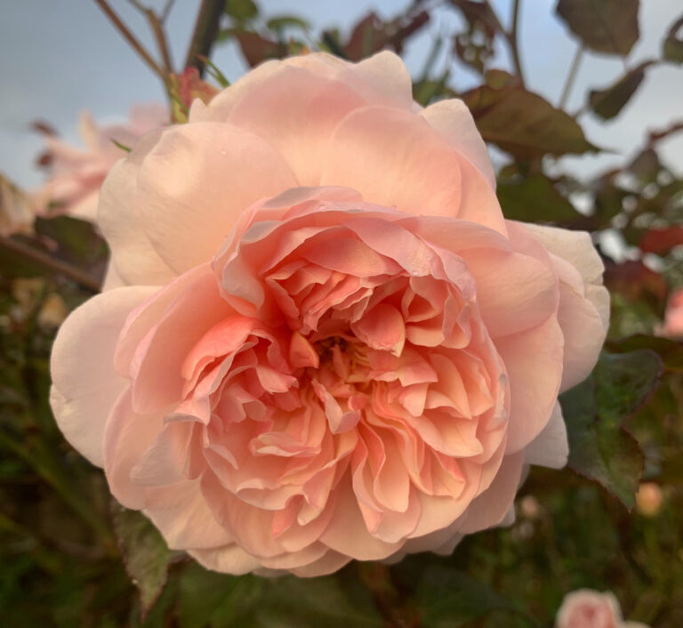 The Darling Buds of April…